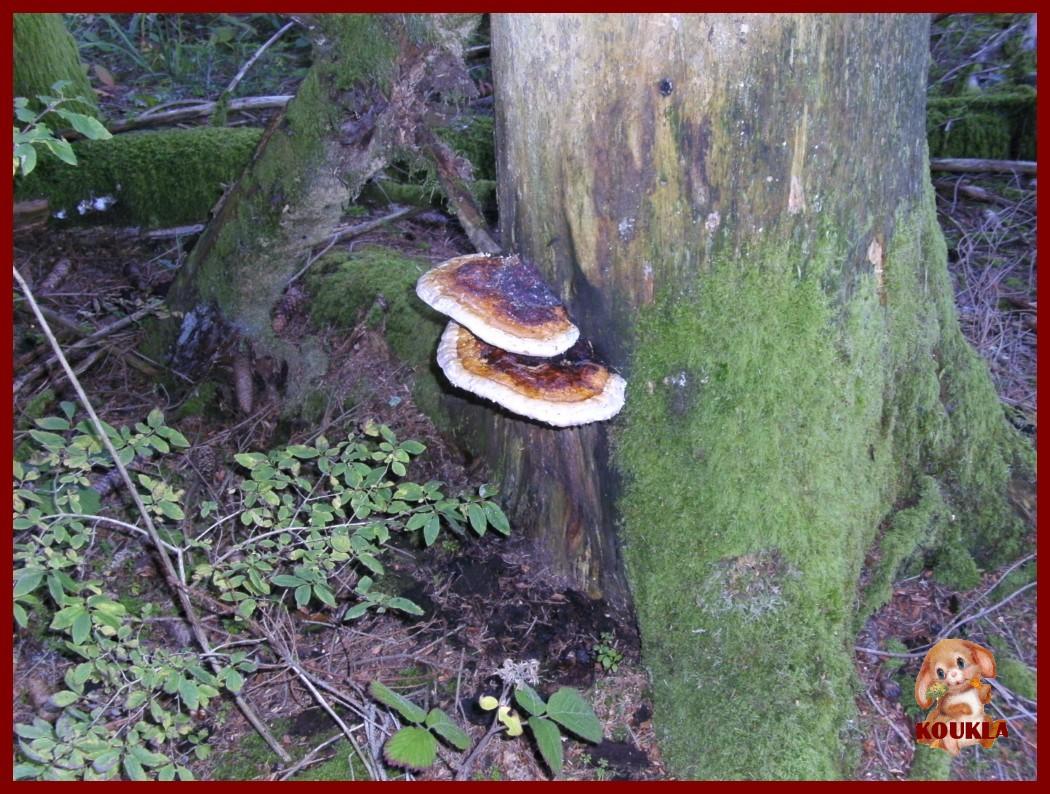 Champignons veneneux - Les champignons de jardin sont ils comestibles ...