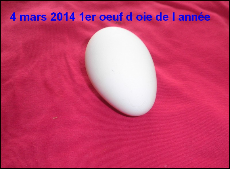 1er oeufs d oies - Duree cuisson oeuf coque ...