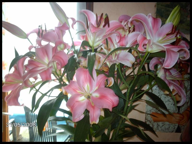 Fleurs bouquet de lys for Bouquet de lys
